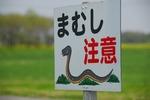 B-Resized 菜の花まつり‥  (11).jpg