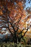 B-Resized 桜山の紅葉 (1).jpg