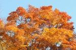 B-Resized 桜山の紅葉 (12).jpg