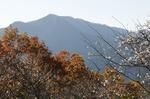 B-Resized 桜山の紅葉 (17).jpg
