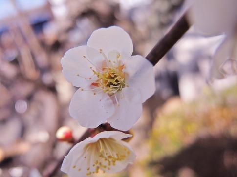 Resized  そば処(三幸)‥ (1).jpg