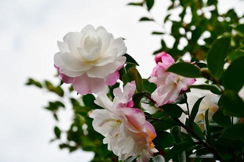 Resized  薔薇の小径‥ (3).jpg