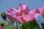 Resized 夏の花 (緑丘〜上町) (5).jpg