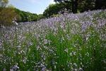 Resized 春の森林公園‥ (9).jpg