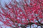 Resized 春の兆し‥.jpg