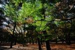 Resized 代々木公園‥ (10).jpg