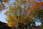 Resized 代々木公園‥ (6).jpg