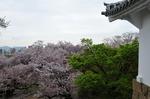 Resized 姫路城‥(西の丸) (9).jpg