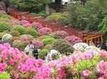 Resized 根津神社の躑躅まつり‥ (17).jpg