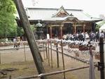 Resized 根津神社の躑躅まつり‥ (9).jpg
