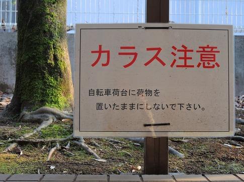 2018-02-24  Resized  所沢航空公園‥ (16).jpg