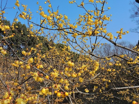 2018-02-24  Resized  所沢航空公園‥ (6).jpg