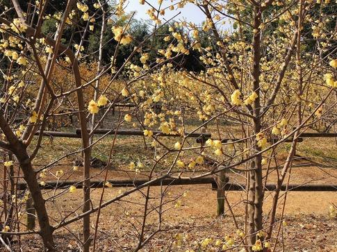 2018-02-24  Resized  所沢航空公園‥ (8).jpg
