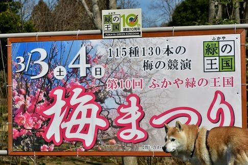 2018-03-03  A-Resized  ふかや緑の王国(梅まつり)‥ (16).jpg