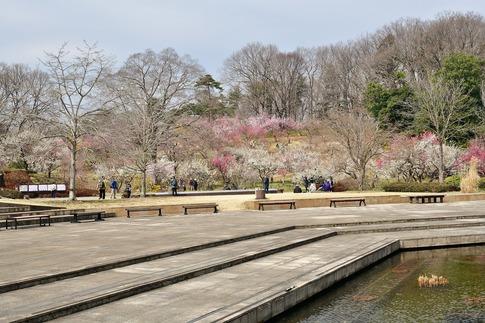 2018-03-11  A-Resized  国営武蔵丘陵森林公園(梅園ほか)‥ (5).jpg