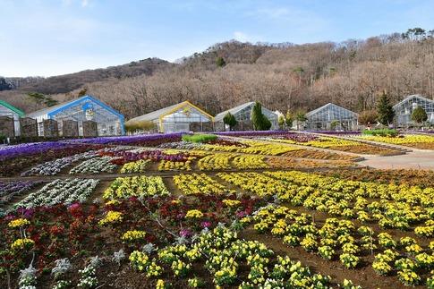 2018-03-24  Resized  とちぎ花センター(みかも山公園)‥ (5).jpg