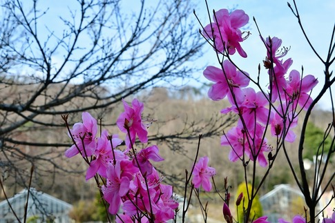 2018-03-24  Resized  とちぎ花センター(みかも山公園)‥ (6).jpg