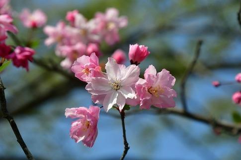 2018-04-01  A-Resized  多々良沼公園‥(群馬県邑楽町)‥ (11).jpg
