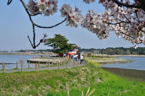 2018-04-01  C-Resized  多々良沼公園‥(群馬県邑楽町)‥ (2).jpg