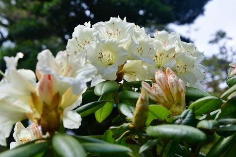 2018-04-08  Resized  十連寺の花まつり‥ (9).jpg