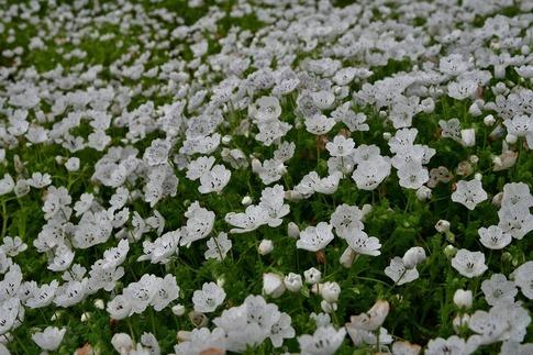 2018-04-15  B-Resized  花の丘農林公苑‥ (3).jpg