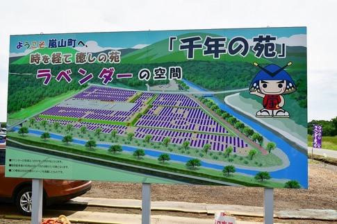 2018-06-24  A-Resized  嵐山町のラベンダー(千年の苑)‥ (9).jpg
