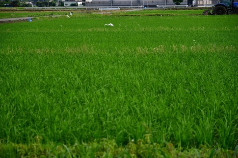 2018-06-24  Resized  川島町‥ (3).jpg