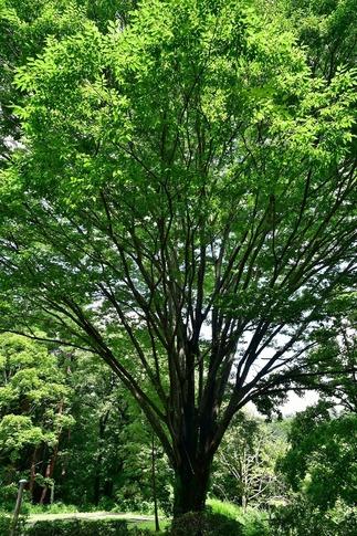2018-07-29  A-Resized  真夏の武蔵丘陵森林公園‥ (2).jpg
