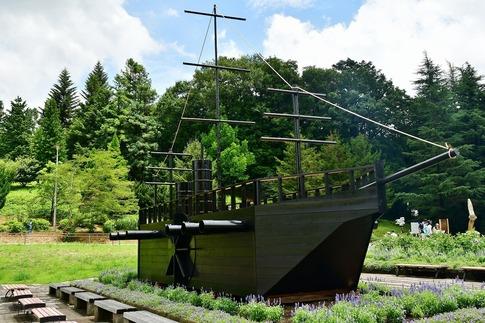 2018-07-29  Resized  黒船(真夏の武蔵丘陵森林公園)‥ (2).jpg