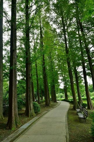 2018-09-08  Resized  上尾丸山公園‥ (1).jpg