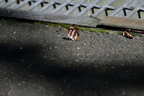2018-09-09  Resized  武蔵丘陵森林公園‥ (5).jpg