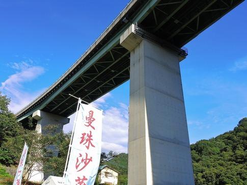 2018-09-22  Resized  秩父郡皆野町下田野のヒガンバナ‥ (5).jpg