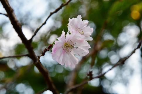 2018-09-23  A-Resized  新宿御苑‥ (4).jpg