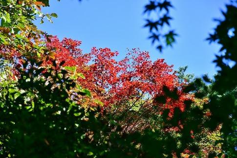 2018-10-07  Resized  赤城自然園(木々の色づき)‥ (5).jpg