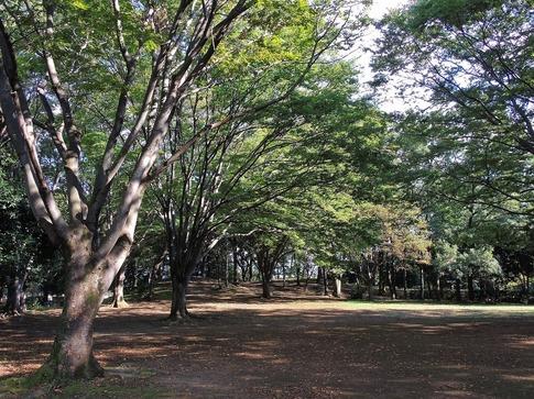 2018-10-20  Resized  伊奈散歩‥ (1).jpg