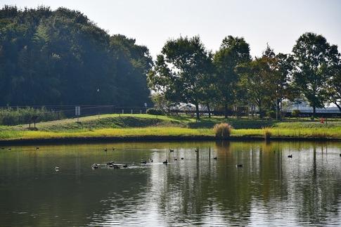 2018-10-27  B-Resized  秋の邑楽中央公園‥ (14).jpg