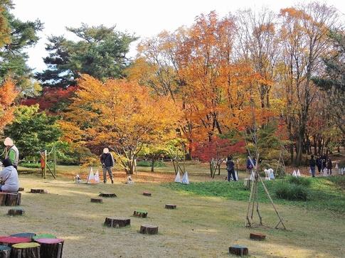2018-11-24  A-Resized  武蔵丘陵森林公園‥ (17).jpg