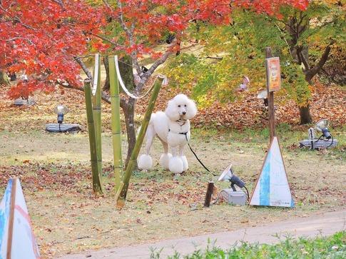 2018-11-24  A-Resized  武蔵丘陵森林公園‥ (18).jpg