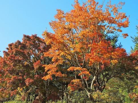 2018-11-24  A-Resized  武蔵丘陵森林公園‥ (4).jpg
