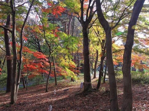 2018-11-24  B-Resized  武蔵丘陵森林公園‥ (12).jpg