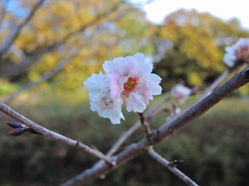 2018-11-24  B-Resized  武蔵丘陵森林公園‥ (15).jpg