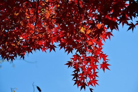 2018-11-25  B-Resized  丸山公園‥ (15).jpg