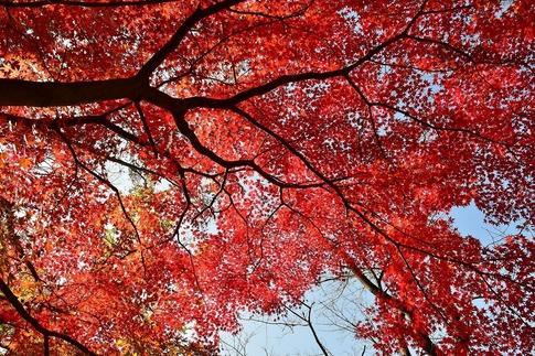 2018-11-25  B-Resized  丸山公園‥ (3).jpg