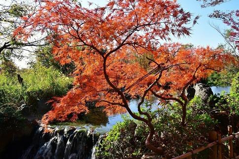 2018-11-25  B-Resized  丸山公園‥ (6).jpg