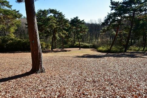 2019-01-05  Resized  正月の森林公園‥ (2).jpg