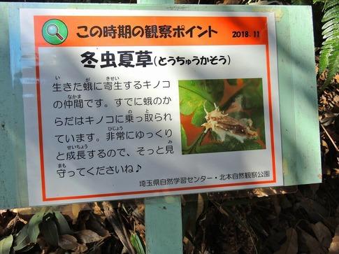 2019-02-03  Resized  北本自然観察公園‥ (4).jpg