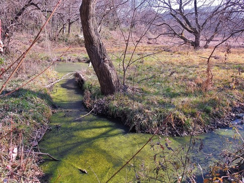 2019-02-03  Resized  北本自然観察公園‥ (5).jpg
