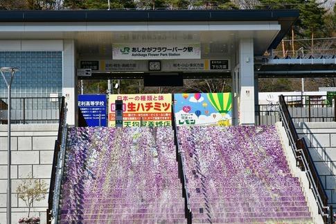2019-02-23  Resized  早春のあしかがフラワーパーク‥ (1).jpg