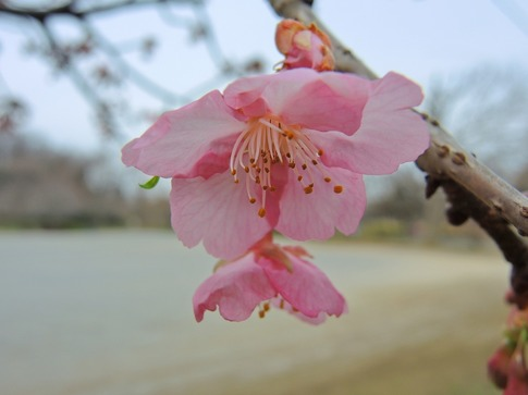 2019-03-10  Resized  上尾丸山公園‥ (8).jpg