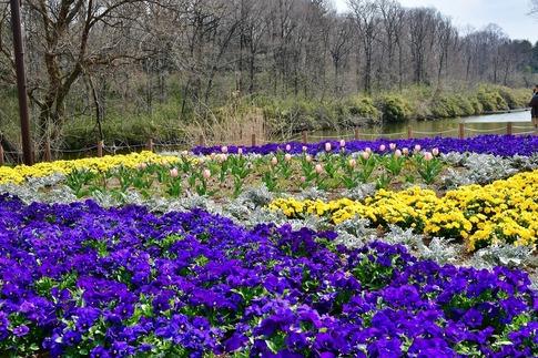 2019-03-17  Resized  早春の武蔵丘陵森林公園‥ (4).jpg